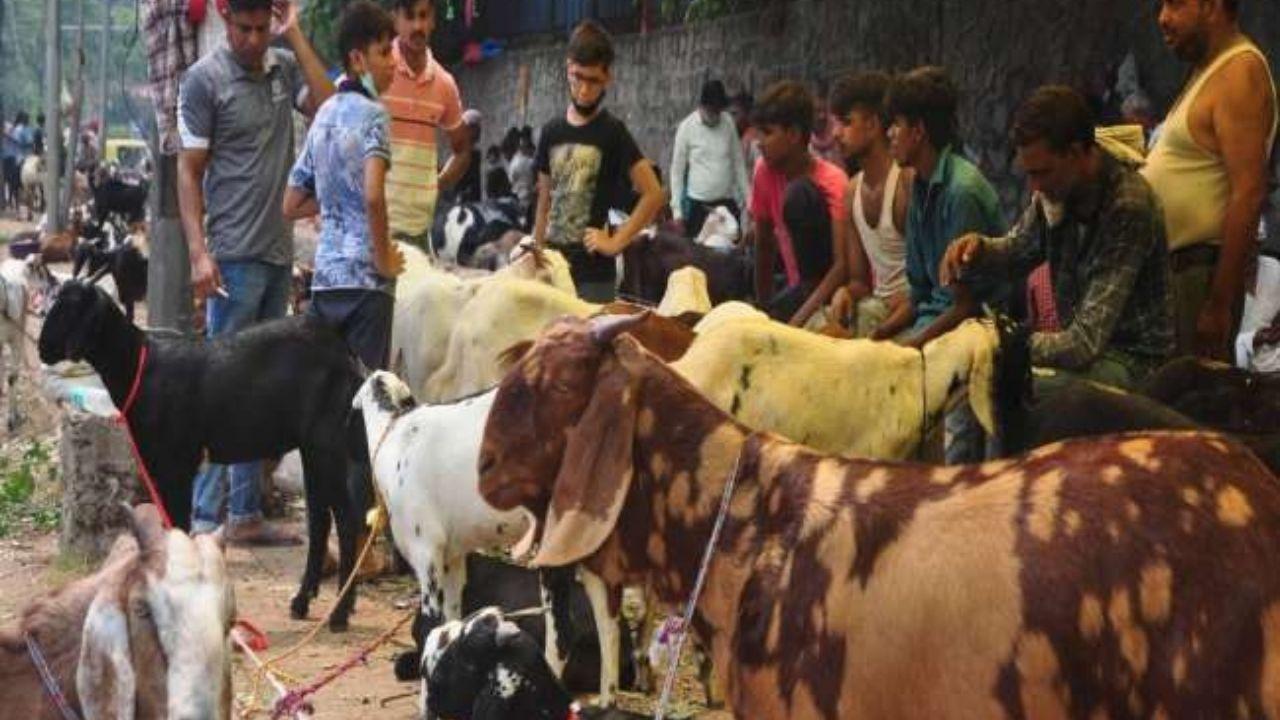 India Goat Market Price 2021: आज  मनाई जाएगी बकरीद, जानें आपके शहर में बकरे का क्या है रेट