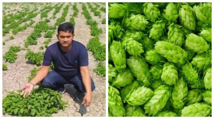Exclusive: बिहार में hop-shoots की नकली खेती! खोजा तो कहीं नहीं मिली ये सब्जी ...अब होगी कार्रवाई