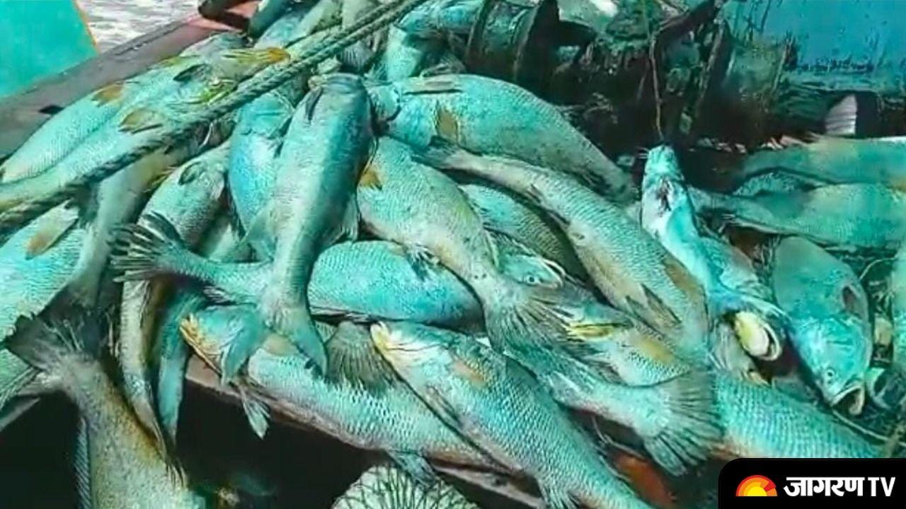 Fisherman turns Crorepati: Caught fish with heart of gold