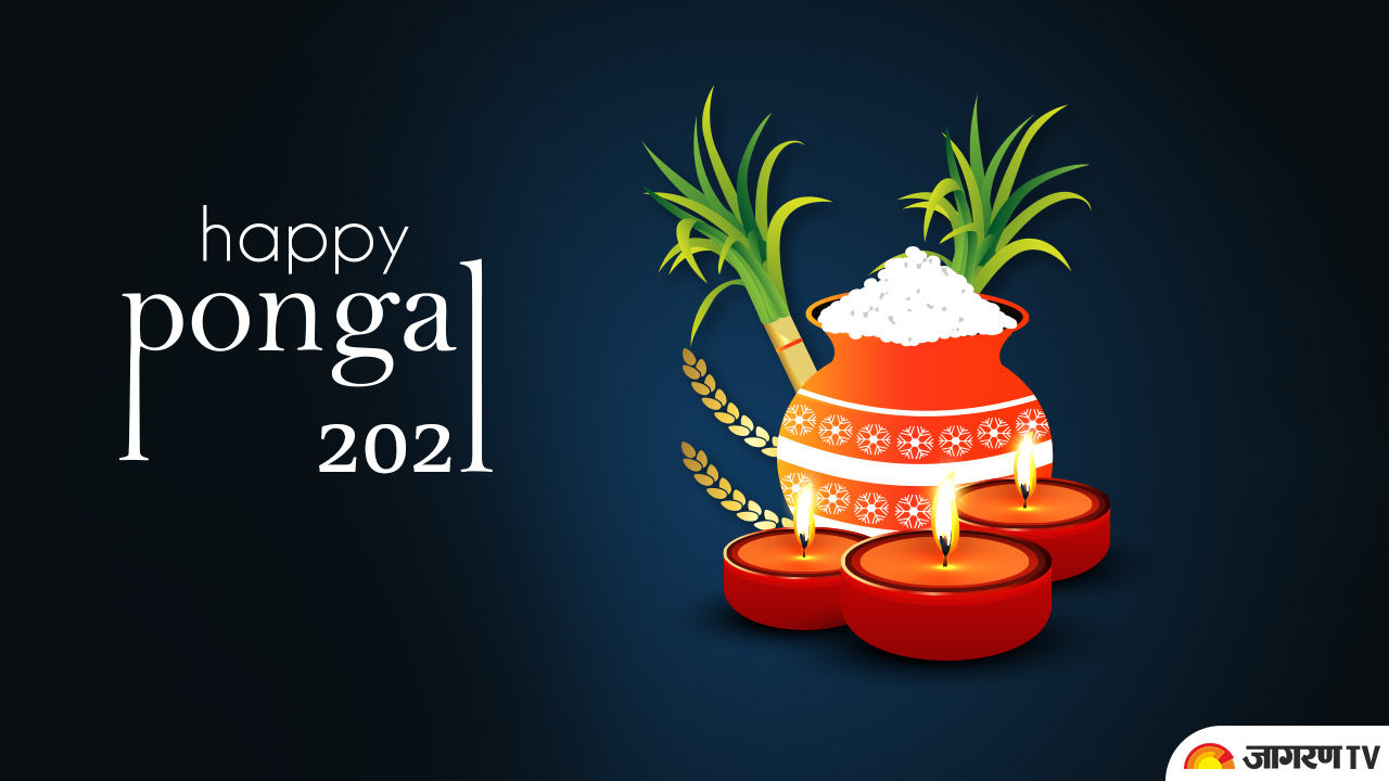 Pongal 2021:  How Pongal Festival is Celebrated, what is its history, significance and story