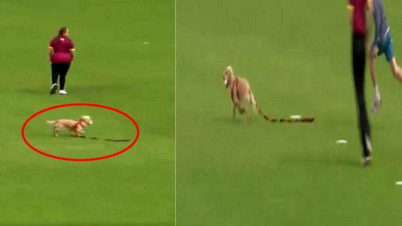 Viral Video: क्रिकेट मैच के दौरान गेंद लेकर भागा कुत्ता, कुछ देर तक रुका रहा मैच, वीडियो हुआ वायरल