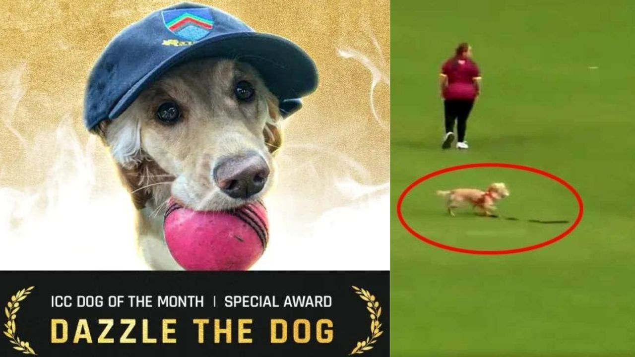 ICC Dog Of The Month Award :मैदान में घुसकर फील्डिंग करने वाले इस कुत्ते को आईसीसी ने दिया ये खास अवॉर्ड
