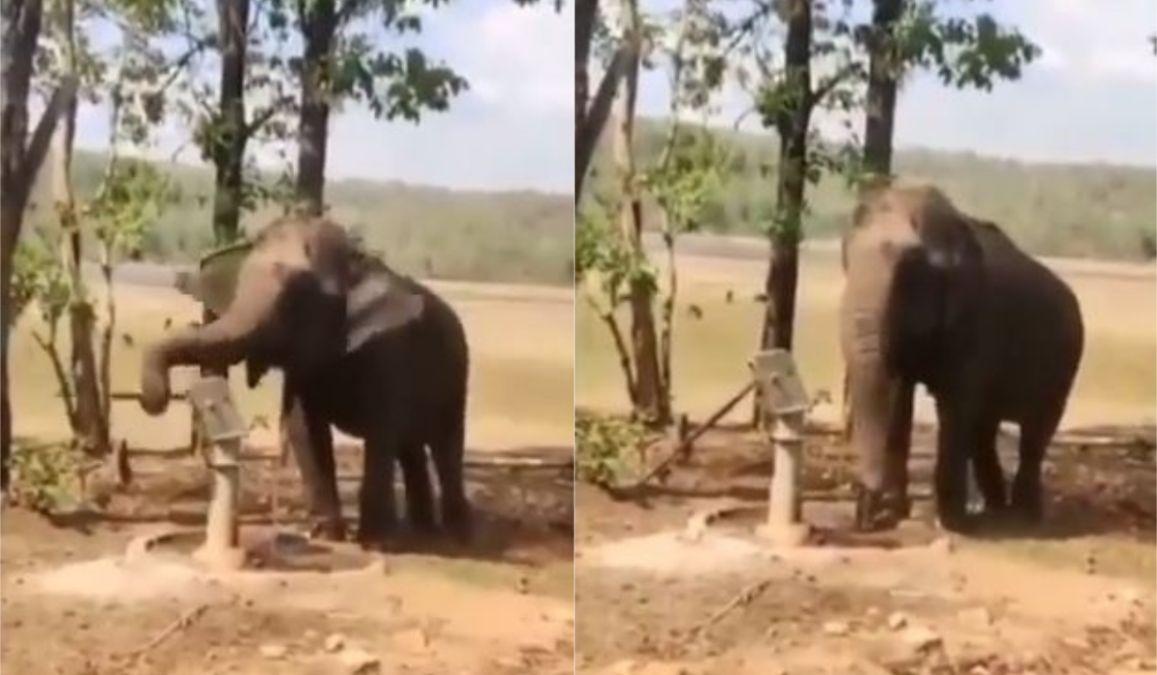 गर्मी में न हो परेशानी, प्यासे हाथी से सीखें गजब का जुगाड़, सोशल मीडिया पर VIDEO हुआ वायरल